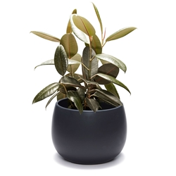 CLARITY Planter - Large