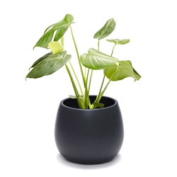 CLARITY Planter - Medium