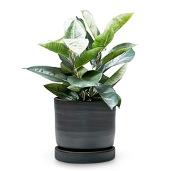 ELEMENT Planter - Black - Small