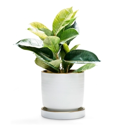 ELEMENT Planter - White - Small