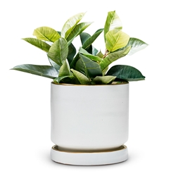 ELEMENT Planter - White - Large
